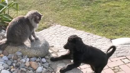 caro und wulli baby